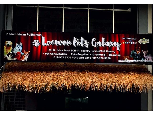 Leowon Pets Galaxy